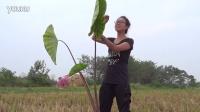 花虫鸟林-芋头姐姐王老师带领孩子野外生动课堂