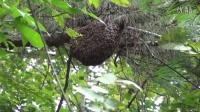 贵州生活之《一群疯子搞蜂子》养蜂篇