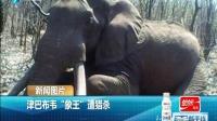 """海峡新干线20151019津巴布韦""""象王""""遭猎杀"""