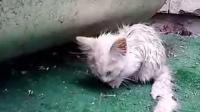 可怜的流浪猫咪