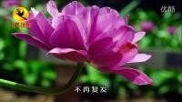 视频诗歌《这场花事》