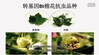 IdeasLab | 依据植物遗传学,发现新的农业应用