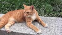 猫-休息被打扰还不开心