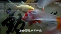 鱼缸里的校训和成语