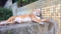 我和家楼下的猫-喵喵的日常生活