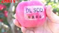 庄河电视台《庄河纪录》20151114 吴炉的苹果红了