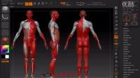 人体结构001-人体比例讲解