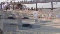 帆船酒店庆阿联酋44周年国庆放生44只海龟