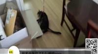 搞笑动物视频合集动物中的影帝亮瞎双眼【喵呜与汪汪】