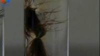 初中化学实验 酸碱性对头发的影响实验 友联科教