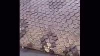 【巨蛇】太可怕了