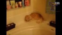 喵星人:劳资才不要洗澡!_(зゝ∠)__标清