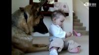 【米米折】好害怕狗狗误伤宝宝 毕竟狗会护食