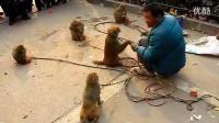 民间耍猴艺人_标清