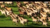 草原群马奔跑万马奔腾千军万马奔驰骏马海边马群高清实拍视频素材