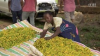 Co-Impact Sourcing of Ylang Ylang from Madagascar