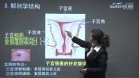 2016年护师妇产科护理学第一章、女性生殖系统解剖与生理(1)