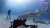 【藤缠楼】精彩瞬间!鲨鱼在潜水员掌心倒立