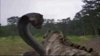 巨蛇大战巨蜥,胆小勿看!