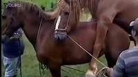 马的延续2