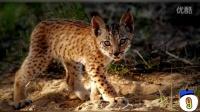 地球上15种珍稀和濒危的动物