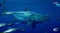 20英尺长的巨型大白鲨在墨西哥水域拍到