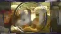 1997年CCTV-1新闻30分栏目中间片头_00