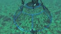 水下实拍捕蟹笼捕蟹过程,可算弄明白这个笼子的原理了