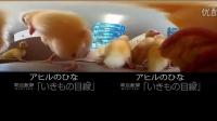 【爱玩VR】全景萌宠 小黄鸭