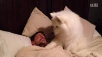 萨摩有时候也蛮可爱的。尤其是当你熟睡中