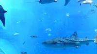 我的美丽大鱼缸(中华琉球国海洋公园)