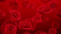 LED086 红玫瑰浪漫心型唯美婚礼背景018 (1)