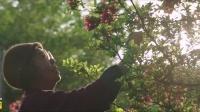 日本电影《澄沙之味》(豆沙之味)预告片 Sweet Bean 2015