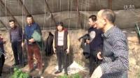 2016年2月26日辽宁省沈阳市辽中县使用耕田乐的大棚黄瓜