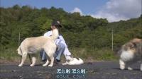 【岩合光昭】猫步走世界--山口县