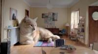 超级大猫告诉你,到底有多舒服! [开眼Eyepetizer-160310期]