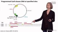 基因组编辑革命——CRISPR-Cas9