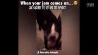 「身邊那位白目朋友」Vine 搞笑短片精選 ❸❺ (中文字幕)