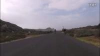 鸵鸟与自行车的公路追逐赛