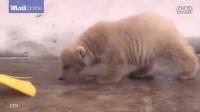 可爱双胞胎北极熊缠着管理员卖萌