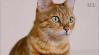 【纪录片】猫科动物的故事.第2集.可爱回应