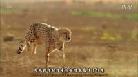 【纪录片】猫科动物的故事.第1集.野性依存