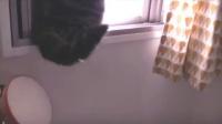 世界上最萌的宠物猫——来自日本的小圆(2)