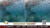 """共度晨光20160419探险家抓拍海底 """"鱼群龙卷风"""" 高清"""