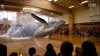 全息技术—鲸鱼