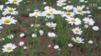 20160502美丽的花儿