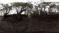 恐怖的鸟人【 360º VR全景】