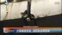 新闻斗阵讲-20160426-小猫被困高架 消防架云梯营救
