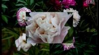 5月天津水上公园看花
