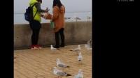 """昆明游客用纸袋装海鸥 将其""""劫走""""[高清版]"""